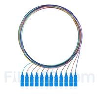 Image de 1m Pigtail à Fibre Optique à Code Couleur SC UPC 12 Fibres OS2 Monomode, Sans Gaine